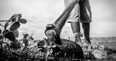 SDR não entrega sementes e agricultores podem perder safra em Lagoinha do Piauí.